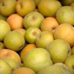 梨狩りに行くならいつ?8月から始まる梨の旬。夏から秋にかけて梨の旬は続きます。