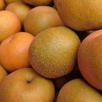 梨の品種ごとの常温での日持ちについて