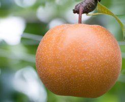 梨 収穫 年数 時期 目安 見分け方