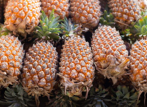 パイナップル 種 どこ 食べられる