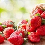 イチゴのクラウンは温度制御によって太さは変わる?褐変した原因は?