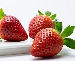 イチゴ 果実 構造
