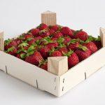 いちごの肥料にはどのような成分が含まれている?肥料の選び方と与える時期について