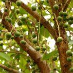 イチゴの茎が黒い…折れる…原因と対策方法