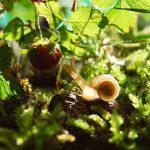 いちごを食べる虫について