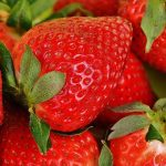 イチゴの定植の向きと間隔