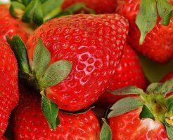 イチゴ 定植 向き