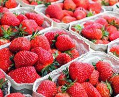 イチゴ 栽培 プランター