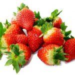 イチゴはどのくらいの温度で発芽する?発芽させる方法について