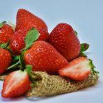 イチゴの品種ごとの休眠に必要な温度と時間について