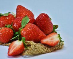 イチゴ 品種 休眠
