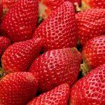イチゴに白い粉が付着しているのは病気?~原因と対策について~