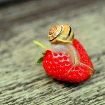 イチゴを狙う害虫について~種類と駆除方法、対策について~