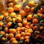 グレープフルーツの持つ光毒性とその成分