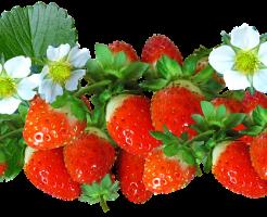 イチゴ 歯 痛い 原因 対処法