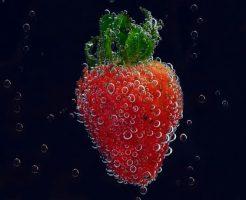 イチゴ 苗 種類