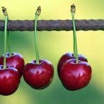さくらんぼの品種の見分け方について
