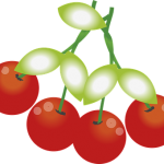 さくらんぼの品種の一つであるサミット!その価格と味は?