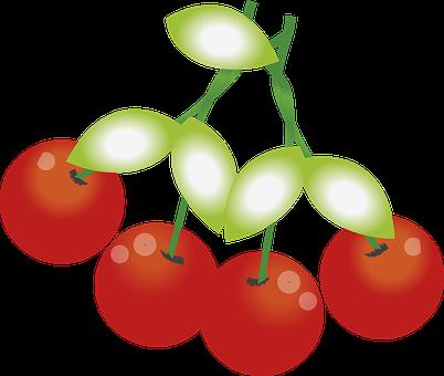 さくらんぼ 品種 サミット