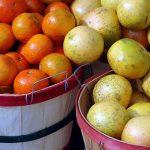 グレープフルーツの国産っていつが旬?値段は?