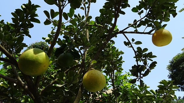 fruit-1762420__340