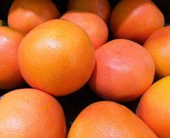 グレープフルーツ 木 実