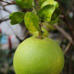 グレープフルーツと高血圧の薬の相性が悪いのはなぜなのか?成分について