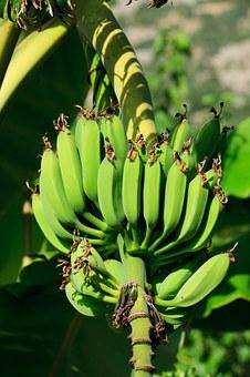 バナナ 食べる 動物