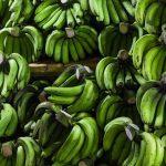バナナを冷蔵庫に入れると黒くなる理由!防止策は?