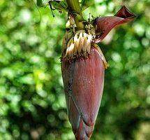 タンパク質 離乳食 バナナ