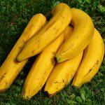 バナナの栽培方法!肥料や収穫時期は?