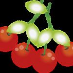 さくらんぼの食べ方マナーの良い種の処理方法