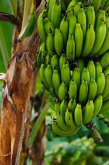 朝 バナナ 食べる 効果