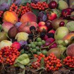 ブドウ種子の成分と毒性について