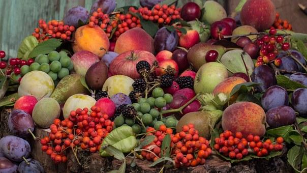 ブドウ 種子 成分 毒性