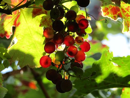 風邪 いい 果物