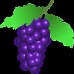 ワインに使われるぶどうの種類について