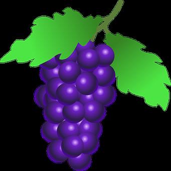 ぶどう 種類 ワイン
