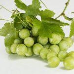 ぶどうを種子から育てよう 種の保存方法