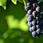 ブドウの名前の漢字とその由来について