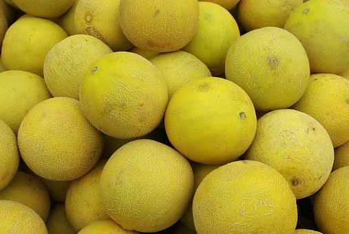 クインシーメロン メロン 栽培