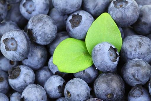 ブルーベリー 品種 パトリオット 育て方 コツ