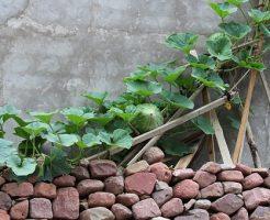 メロン 栽培 注意 病気 予防法