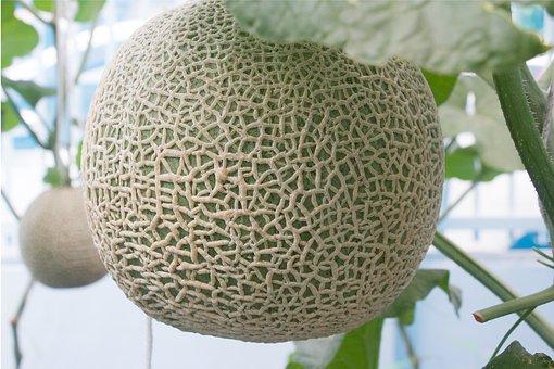 メロン アレルギー 花粉 関係性