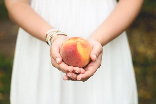 家庭で桃 鉢植え 栽培 過程 方法