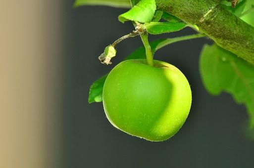 りんご 黒星病 赤星病 褐斑病 対策 防除