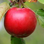 りんごの色素、成分とは?