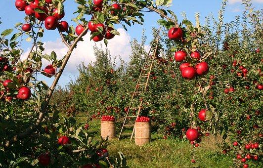 りんご 中 赤い斑点 原因 対策