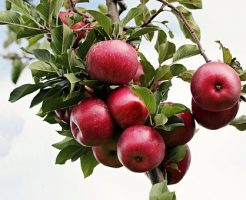 りんご 価格 推移
