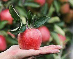 りんご サンふじ ふじ 違い 特徴